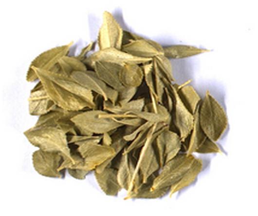 Agathosma betulina